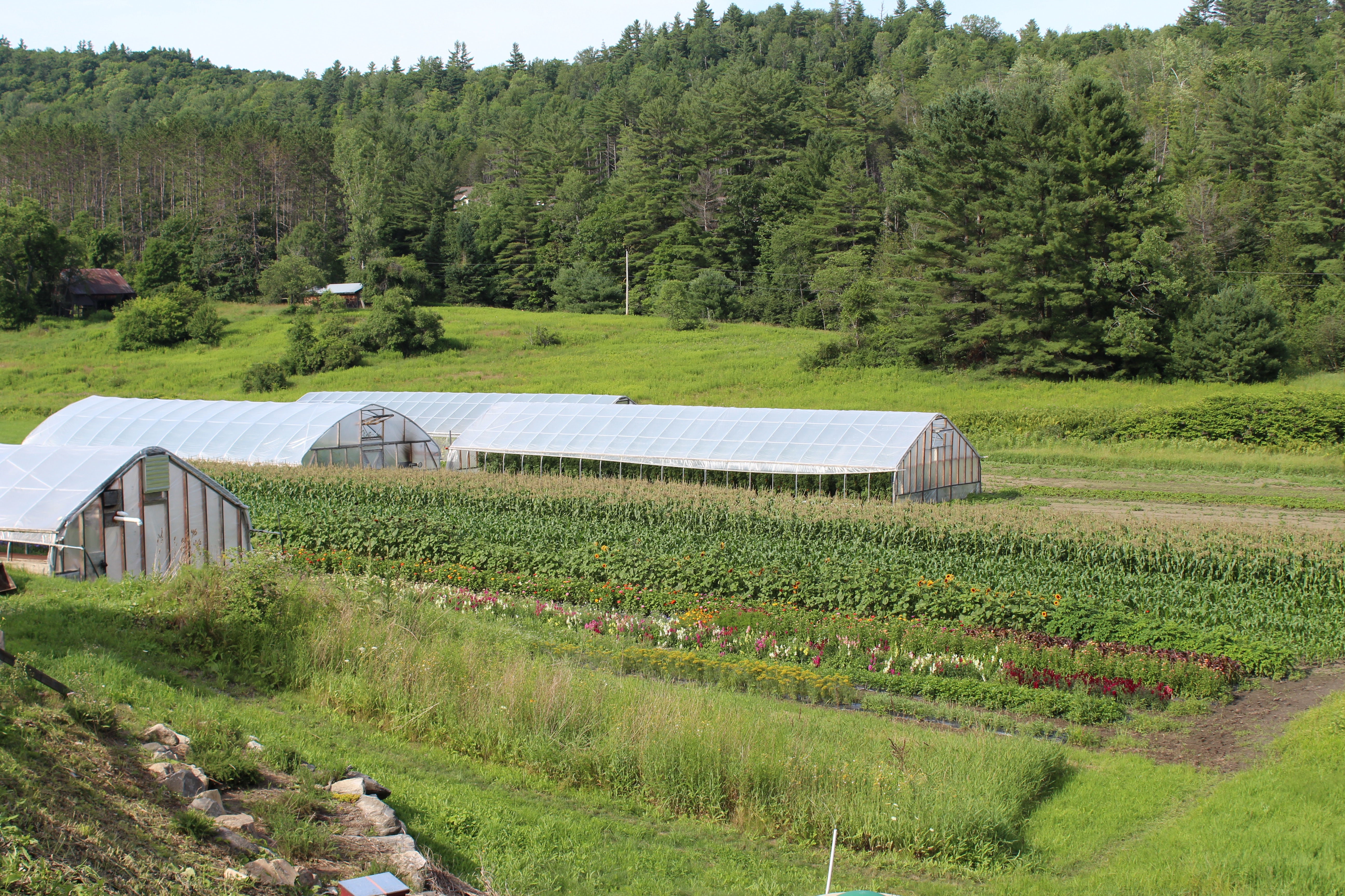 Stories From the Soil: Three Months on Joe's Brook Farm « LEO