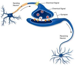 leo-article-brain-cells